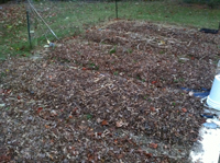 leaves on the garden as mulch