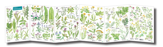 plant field guide