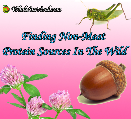 Survival Foraging Finding Non Meat Protein Sources In The Wild